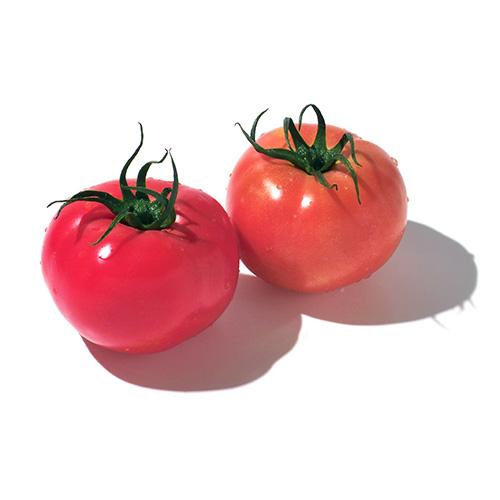 トマトパウダー